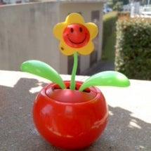 100円の可愛い花
