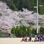 桜2014 ~山口市…