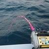 新島沖の金目鯛はこれからが旬なのだぁ~の画像