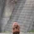 なごり桜(^-^;…