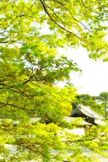 京都御所 春季一般公開