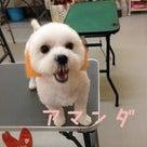 Whiteday☆3/29~31の記事より