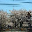 桜・・・の巻