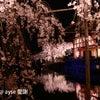 東儀秀樹 平安神宮 紅しだれコンサート 2014の画像