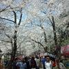赤城南面千本桜!の画像
