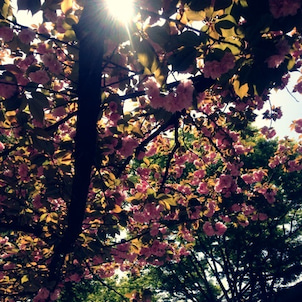 春、新しいスタートの画像