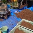 ■田植え準備=稲の苗…
