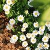 秋冬のお花を、花言葉とともにの画像