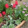 今日のお庭の画像