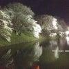 夜桜見物への画像