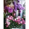今日の出来事(^-^)春のお花たち♪の画像