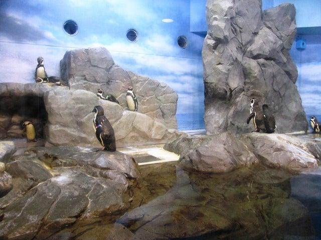 10_ペンギン