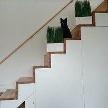 階段と猫扉