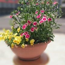 身近な花々