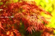 京都 原谷苑 梅&桜祭り