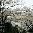 明日、ぽぷらの家春祭…