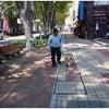 前橋市 渋川市 高崎市 犬の幼稚園 ルテアの画像