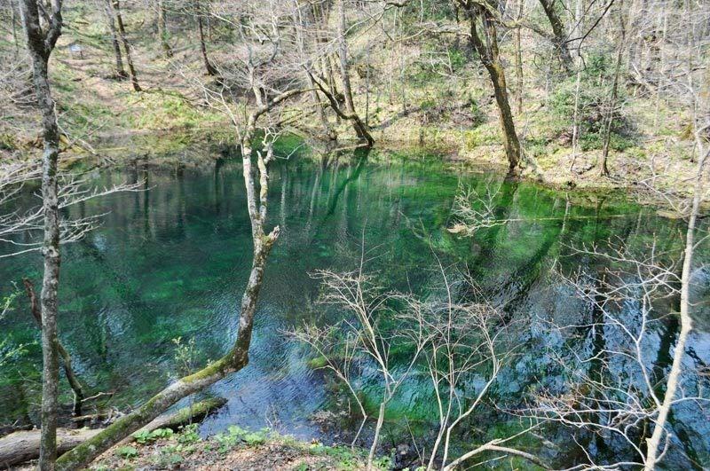 2014年4月下旬の白神山地十二湖19