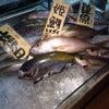 釣り魚盛り沢山!!の画像