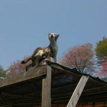 益子 春の陶器市☆