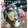 我が家の愛犬の不思議の画像