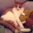 猫 ゴールデンウイー…