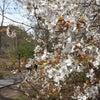 蔦井まゆみさんの「春だもの!美脚作戦!セントラルパーク美脚ウォーキングレッスン@式部会」レポートの画像