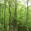 森へのお誘いの画像
