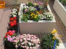 おばあちゃんの花壇
