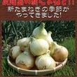 ◆淡路島の新玉ねぎ入…