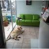 桐生 太田 館林 犬のしつけ 犬の幼稚園の画像