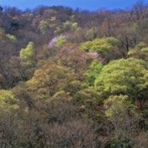 源流の春 新緑の輝き
