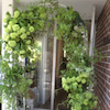 Green Green Gate AKIさんの花屋カフェにての画像