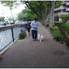 渋川 前橋 犬の幼稚園 訓練の画像