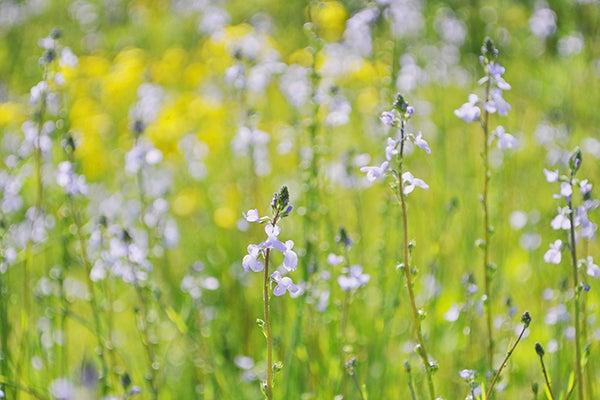 140511_flower2