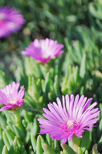 140511_flower1