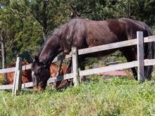 馬のランチタイム