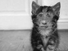 時は止まる君は美しい第三百七十三夜・Cat・Cat・Cat 下