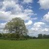 ナショナルトラスト所有のガーデンHatchlands Parkの画像