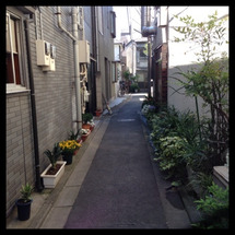 新宿にもハクビシン‼…