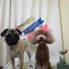骨格ケア<愛犬の歩き方チェック>の画像