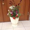 5月の園芸教室 アポアからの お知らせですの画像