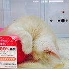 Whiteday♡3/24~28の記事より