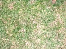 うちの芝生