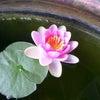 気まぐれな花の画像