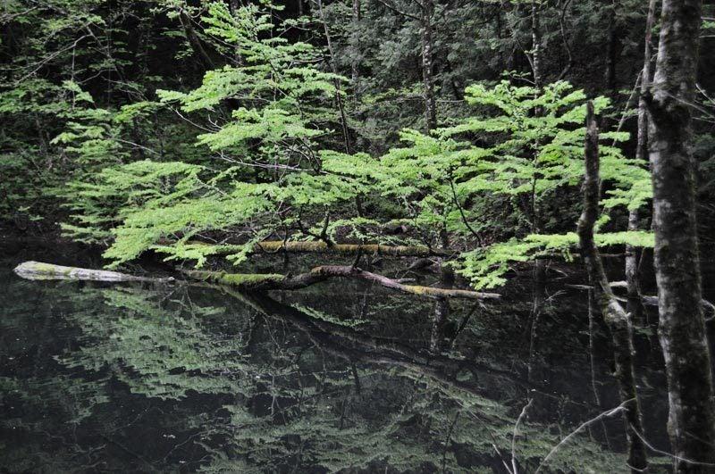 5月中旬の十二湖19