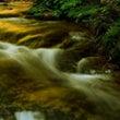 黄金の渓流