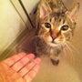 猫のお客さん