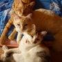 うちの三匹の猫たち、…