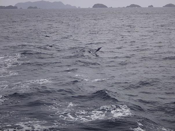 船から見たイルカ